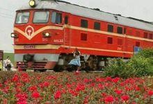 少女铁路自拍火车撞击身亡 陈尸花海
