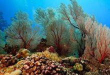 南海海底有多美?水下珊瑚美轮美奂 震撼摄影师