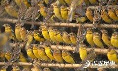 中国吃货们把一个物种吃到频临灭绝 这得多厉害